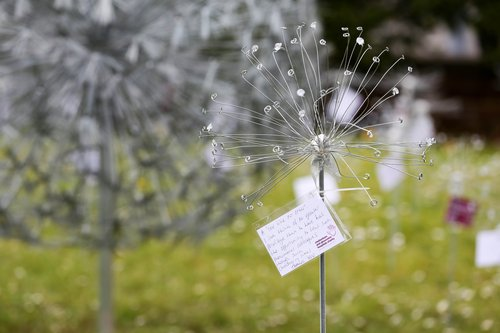 Dandelion memorial